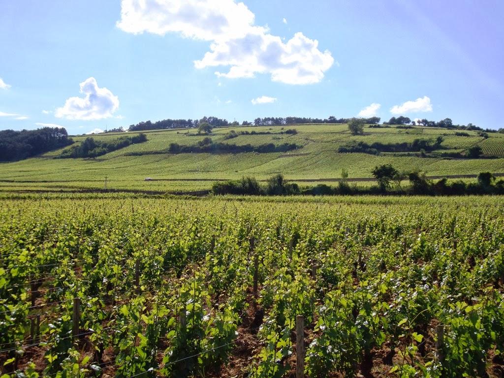 Borgogna-7