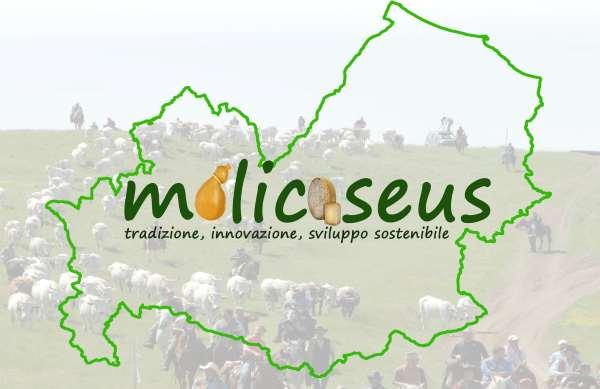 Molicaseus